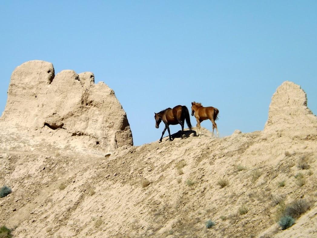 nord turkistan